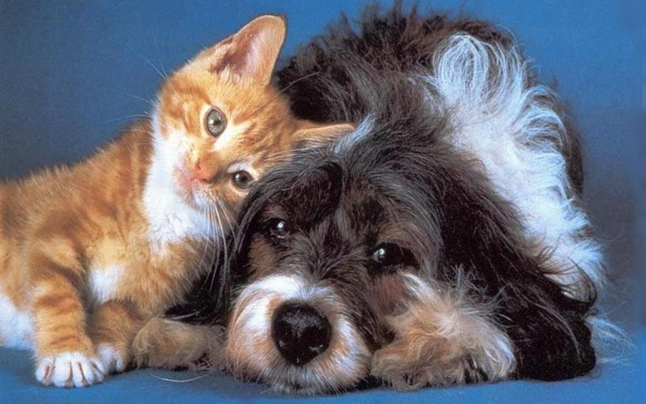 Basic Pet First Aid