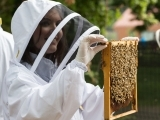 Beekeeping for Beginners - Hampden