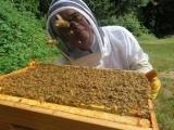 Beekeeping 101 F18