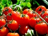 Gardening with Tomatoes