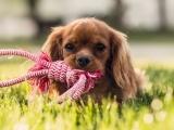 Puppy (OnLine Zoom Class)