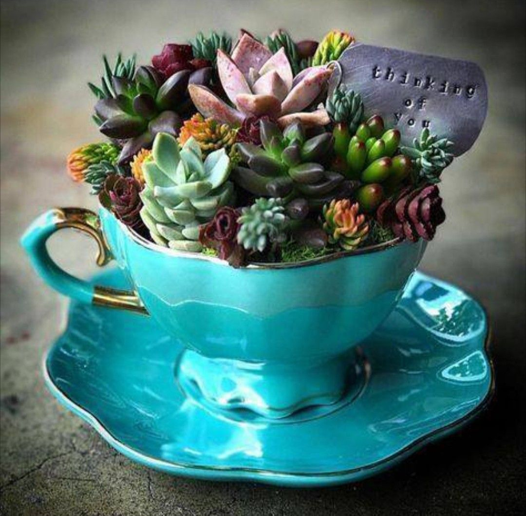 Teacup Mini Succulent Garden