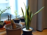 For the Love of Houseplants!