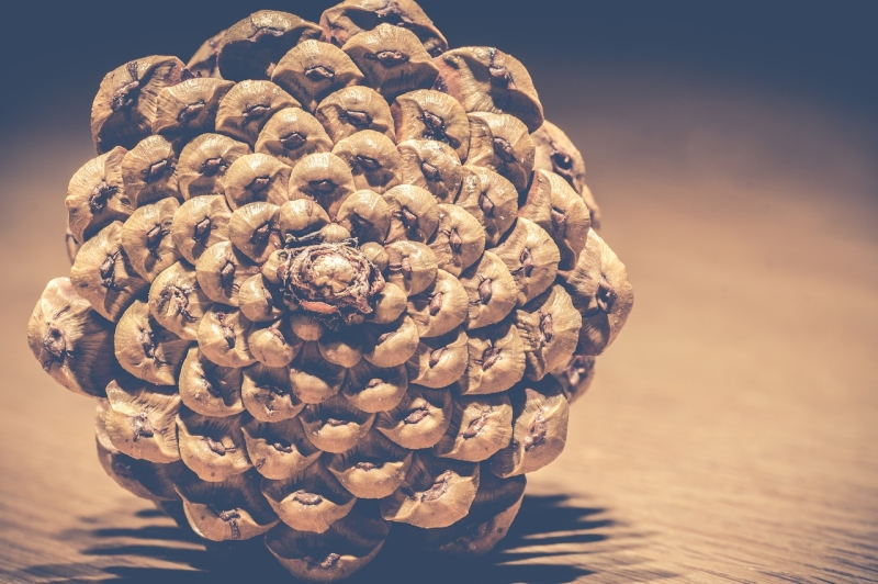 Original source: https://storage.needpix.com/rsynced_images/pinecones-3026691_1280.jpg