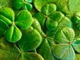 Seisiun (Irish Tunes) - Torrington