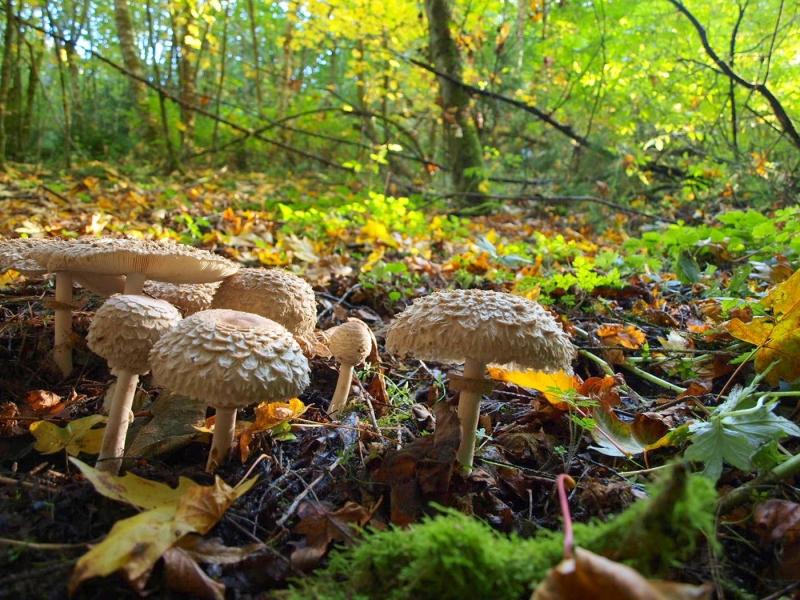 Original source: http://www.napatrufflefestival.com/wp-content/uploads/2013/11/mushrooms_big3.jpg