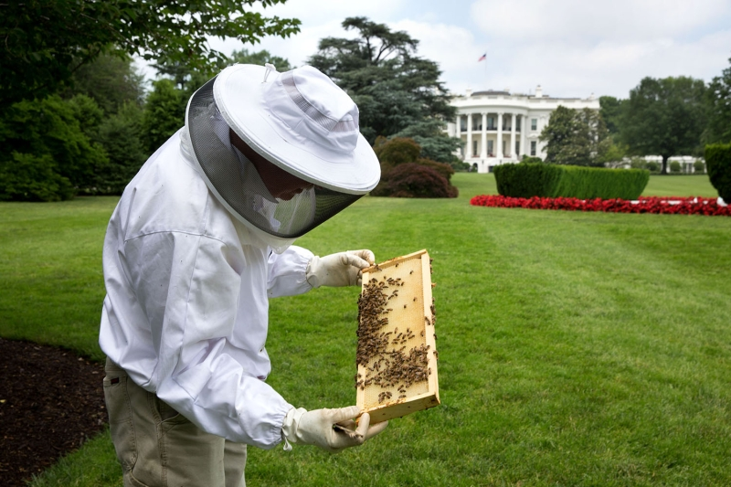 Original source: https://upload.wikimedia.org/wikipedia/commons/d/d0/Beekeeper_Charlie_Brandts_works_on_the_South_Grounds_of_the_White_House.jpg