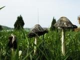 Session I: Mushroom Collecting