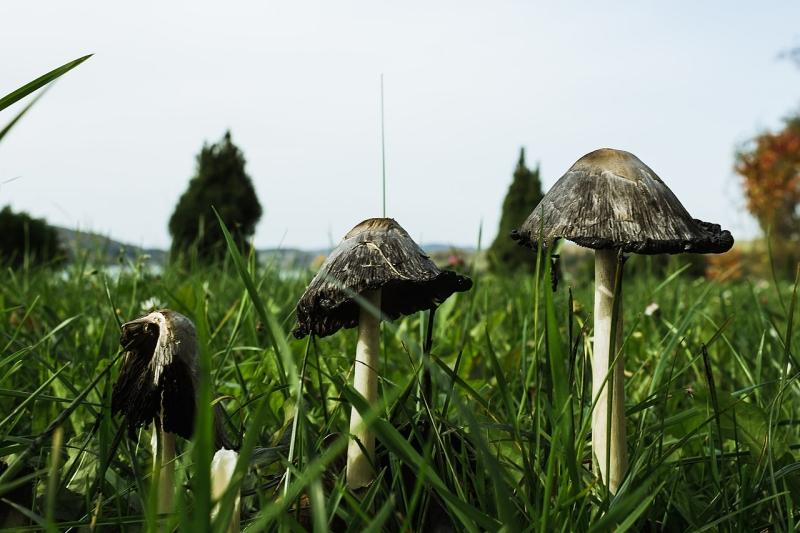 Original source: https://upload.wikimedia.org/wikipedia/commons/thumb/b/b7/Mushrooms_%28224889241%29.jpeg/1280px-Mushrooms_%28224889241%29.jpeg