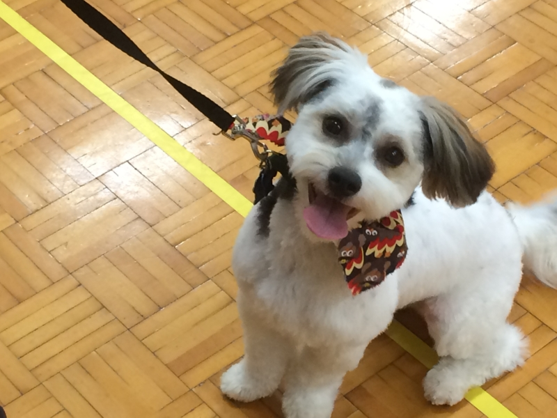 Akc Star Puppy Spring Session Maine Adult Education