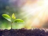 Planting the Seeds of Better Health: Planning Your Vegetable Garden