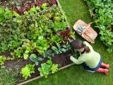 Planning a Great Vegetable Garden