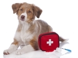 704F19 Pet First Aid And Common Vet Emergencies
