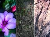 Intermediate Photography (Online Class)
