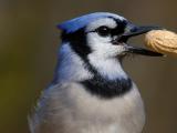 Learning Bird Language: Step into a Bird's World