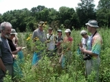 Edible and Medicinal Plant Walk