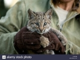 Wildlife Rescue 101 (New) - R1 HVRHS
