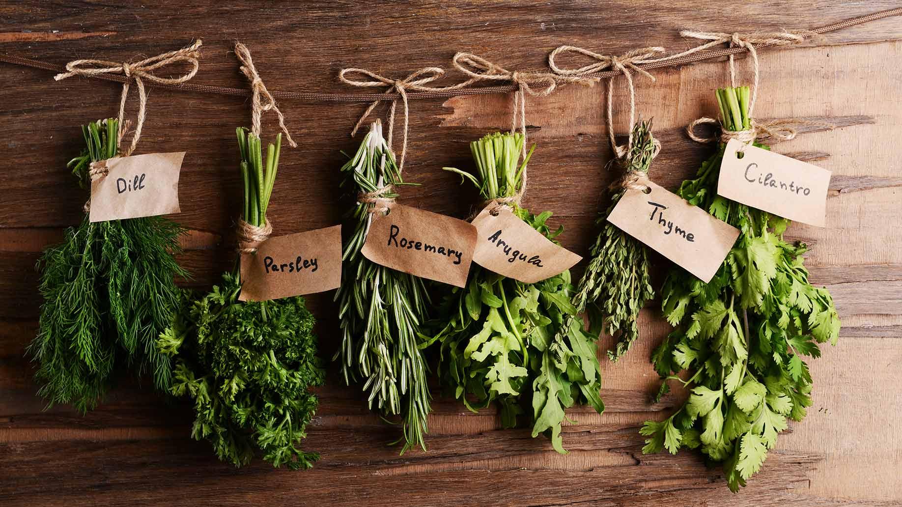 Herbal Basics Spring 2019