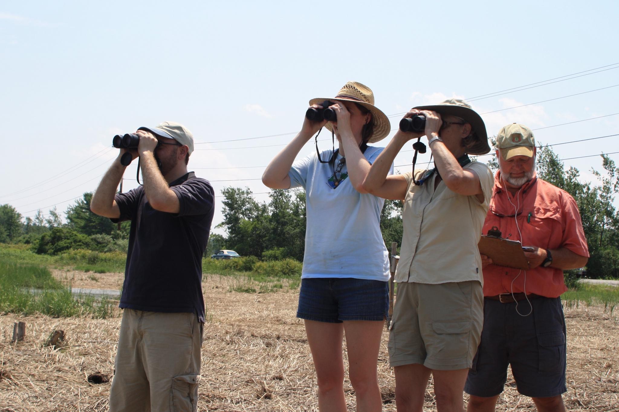 Bird Monitoring