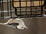 Annual Bird Seed Sale, Fall Bird Feeding Bonanza, Double Discount for Members