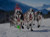 SAGE CanAm Crown Dog Sled Racing in Aroostook County