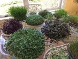 Home Grown Salads Year Round