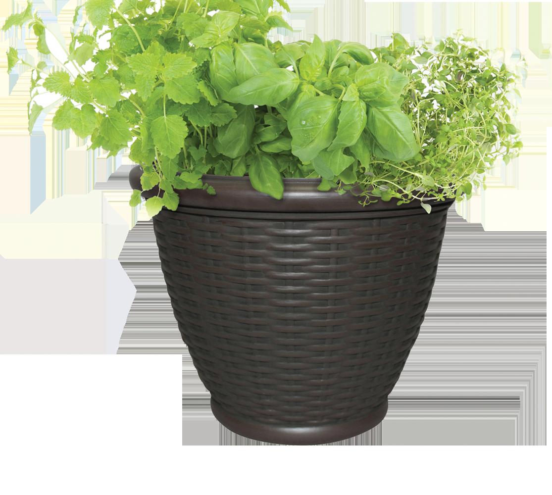 One Pot Salad Gardens
