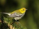 E2103 - The State of Maine Birds - Maine Audubon
