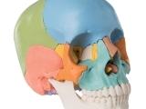 Craniosacral Therapy (T502/E502)