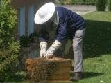 Fundamentals of Beginning BeeKeeping (New) - R1 HVRHS