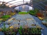 Planting, Pests, & Pruning