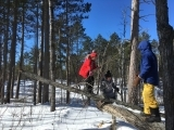 Winter Forest Studies for Kids
