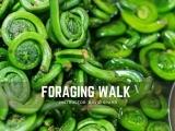 Foraging Walk : Session II